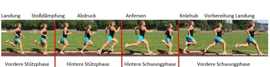 Die Phasenstruktur beim Laufen