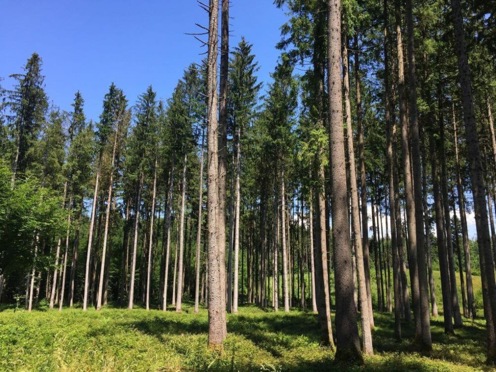 Idyllischer Wald
