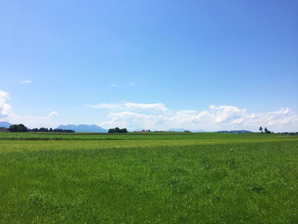 Grüne Wiesen und Bergblick